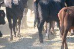 getting animal welfare right