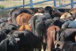 improved productivity through better animal welfare